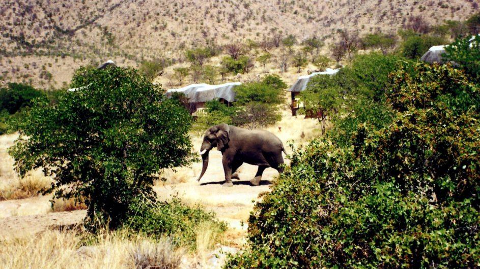 Namibia Damaraland Huab Lodge Elefant im Garten