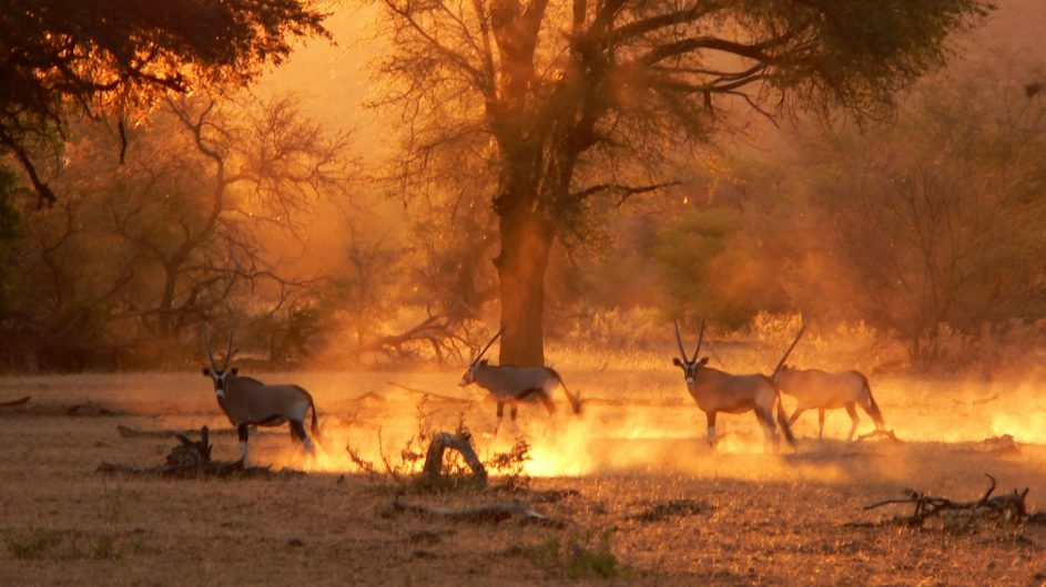 Namibia Damaraland Huab Lodge Sundowner Oryx