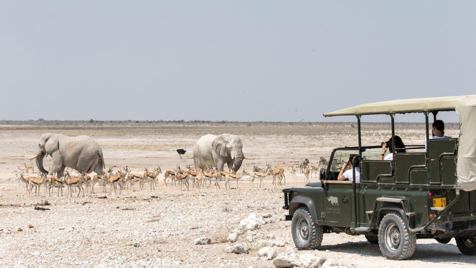Namibia Etosha Nationalpark Ongava Tented Camp Pirschfahrt