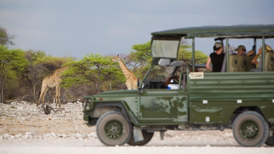 Namibia Etosha Nationalpark Mushara Outpost Pirschfahrt Giraffen