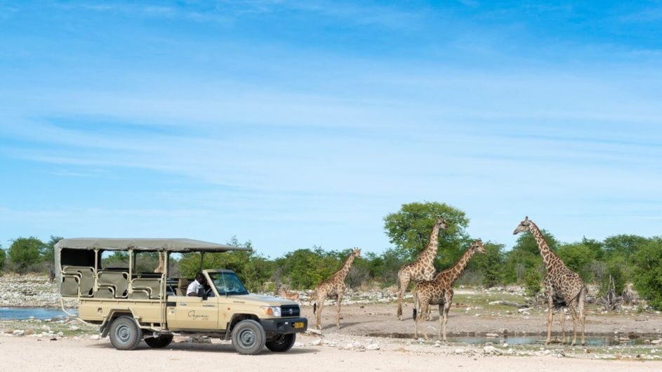 Namibia Etosha Nationalpark Onguma Tree Top Camp Pirschfahrt Giraffen