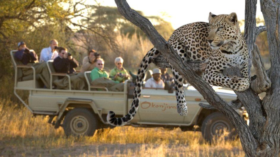 Namibia Okonjima Lodge Leoparden Trekking