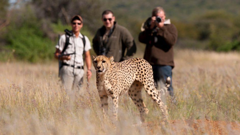 Namibia Okojima Lodge Geparden Trekking zu Fuß