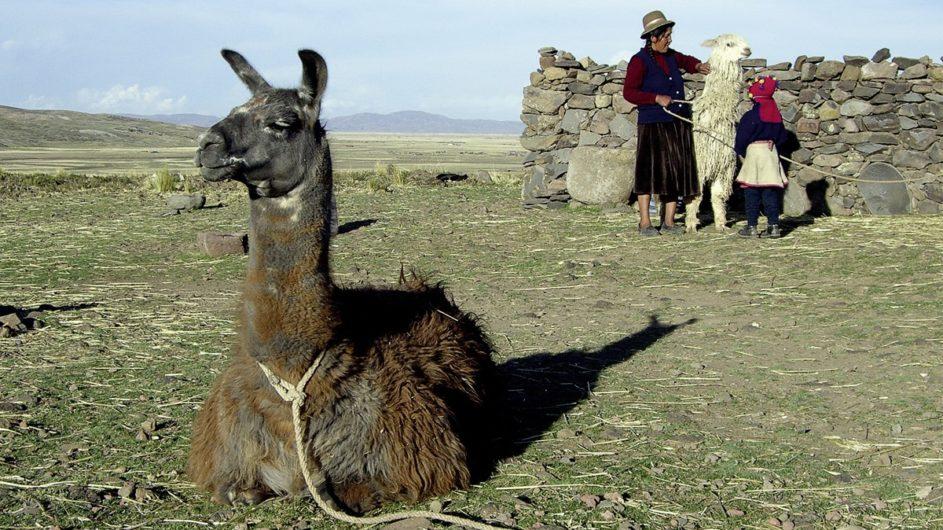 Peru Chamäleon Reisen Kleingruppenreise Machu Picchu Lama am Titicacasee