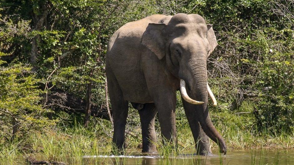 Sri Lanka Chamäleon Reisen Kleingruppenreise Jaffna Elefant