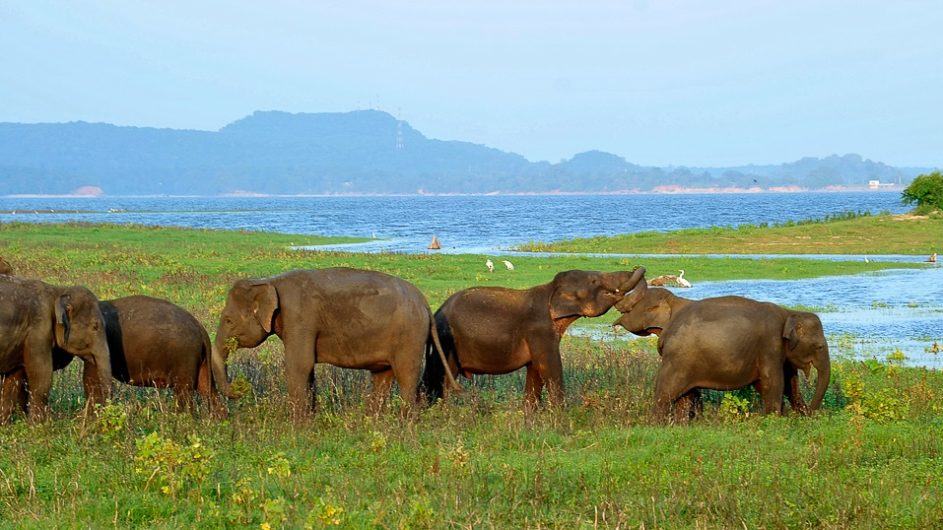 Sri Lanka Chamäleon Reisen Kleingruppenreise Kandy Elefanten