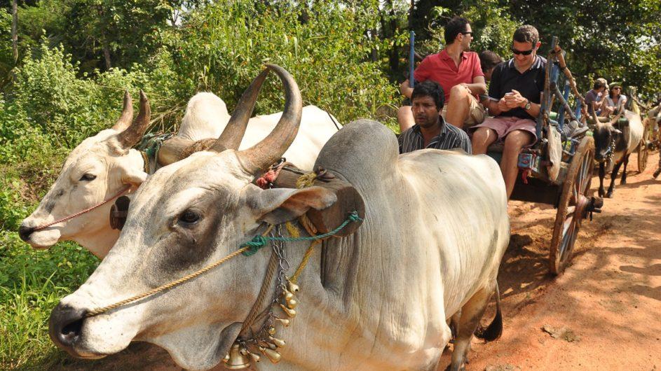 Sri Lanka Chamäleon Reisen Kleingruppenreise Kandy Hiriwaduna