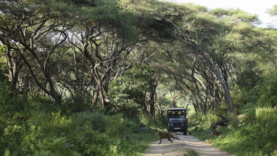 Tanzania andBeyond Lake Manyara Tree Lodge Pirschfahrt
