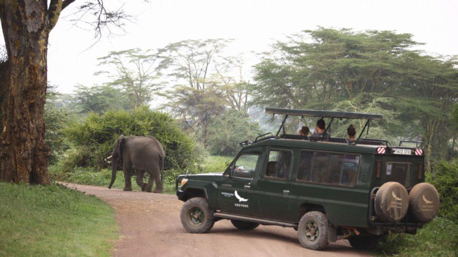 Tanzania andBeyond Ngorongoro Crater Lodge Pirschfahrt Elefant