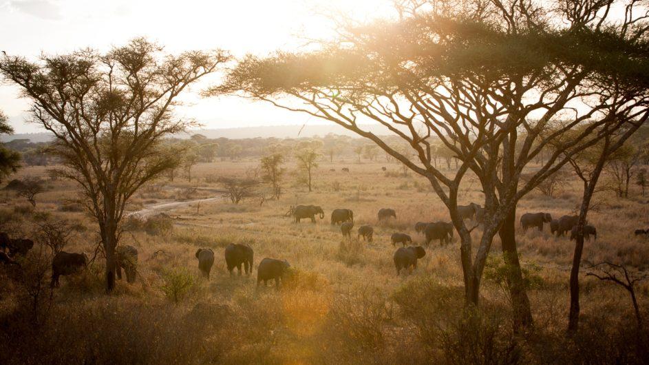Tanzania Tarangire Nationalpark Sailia Olivers Camp Elefanten