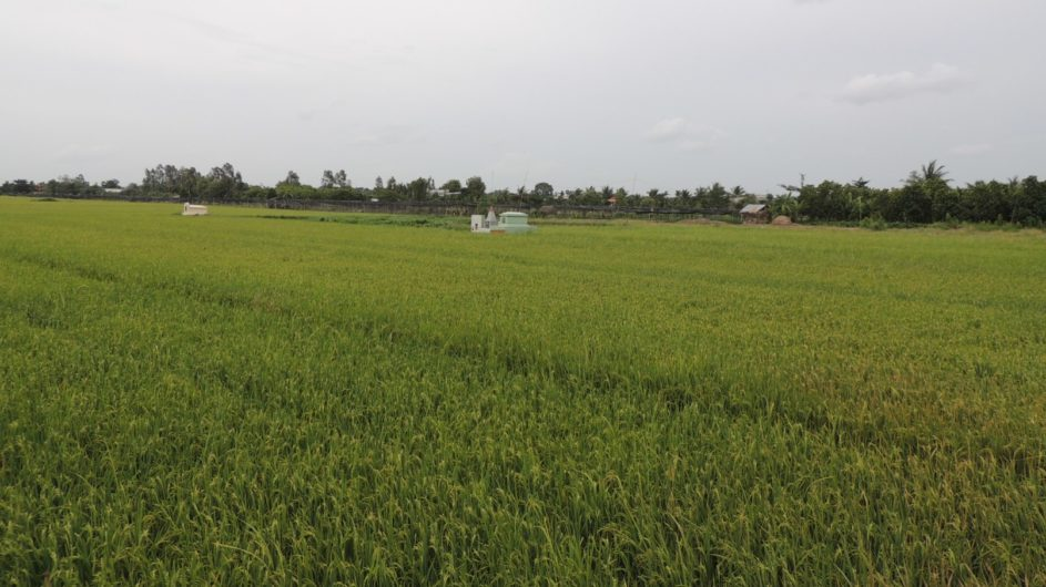 Vietnam EXO Travel Reisfeld