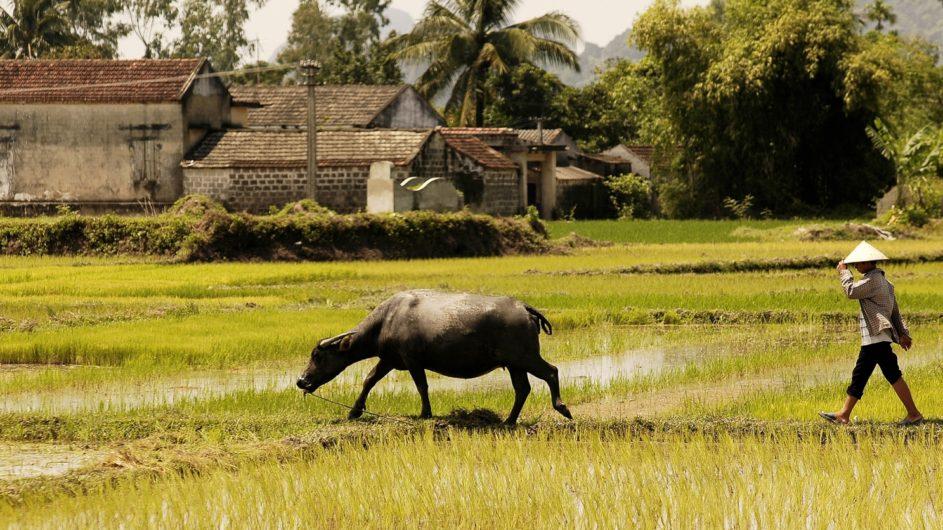 Vietnam EXO Travel Reisbauer